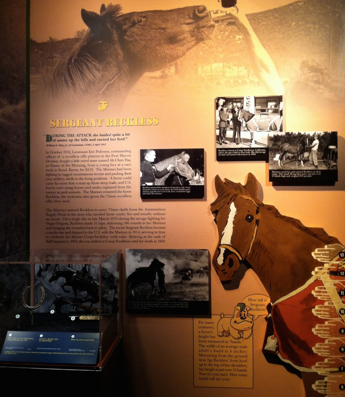 Sgt Reckless Exhibit
